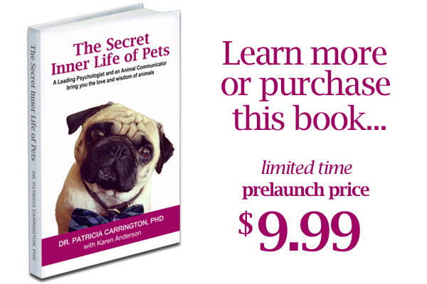The Secret Inner Life of Pets eBook